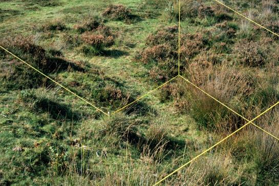 Hiryczuk/Van Oevelen, Field Experiment II, 2011